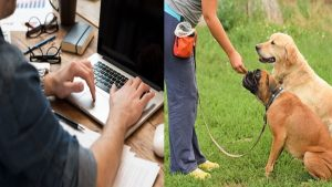 online dog trainer course