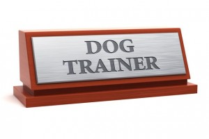 Become a Dog Trainer!