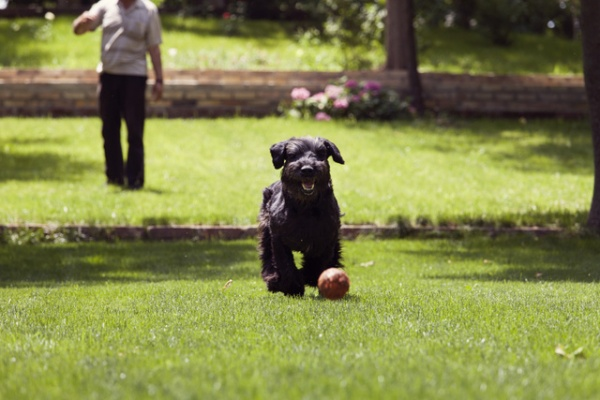 professional dog training service in indiana | dog trainer college