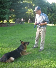 Leashed Training Dog in Indiana
