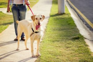 Dog Obedience Training Courses Indiana