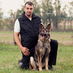 become a dog trainer dog trainer school in indiana dog trainer
