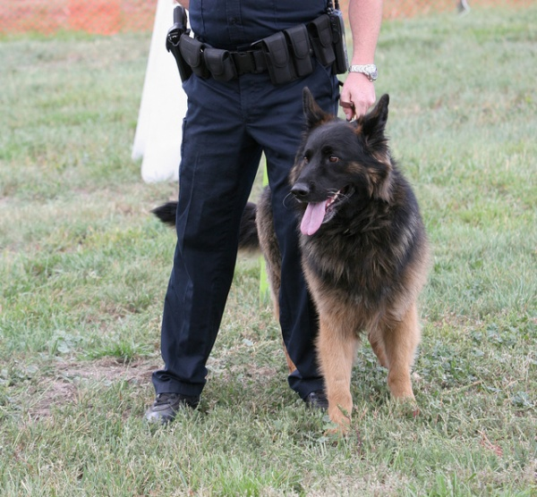 K9 Unit Police Dog Training in Indiana