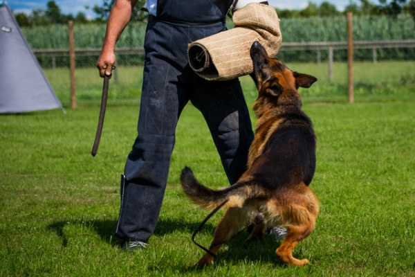 Protection Dog Trainer Course