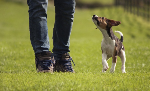 professional dog training certification courses in indiana | dog ...