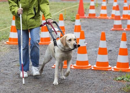 Seeing Eye Dog Training