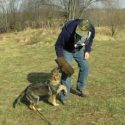What Goes Into Training a Protection Dog?