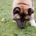 Five Scenarios for Scent Detection Dogs