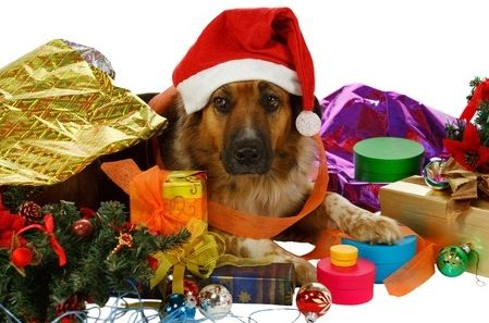 Dogs During the Holidays