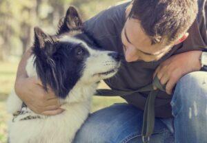 Conifer Canine dog training