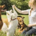 Training Relies on a Trainer's Skill, Not Just the Dog