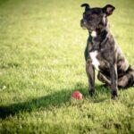 Dog Trainer Tips