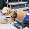 Understand the Difference: Service Animal vs. Companion Animal