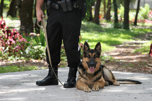 Police Officer and K9 Dog
