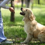 our Experience with Your Challenging Dog Will Make You a Good Trainer