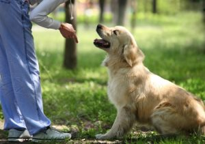 Your Experience with Your Challenging Dog Will Make You a Good Trainer