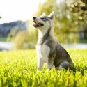 "Why ""Sit"" Matters in Dog Training"