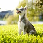 Teaching Your Dog to Be Obedient Starts with Sit