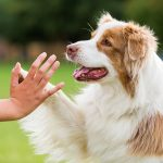 Dog Giving Trainer a High Five