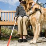 Service Dog Aiding a Blind Woman