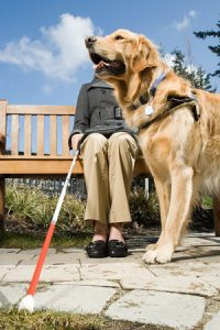 Service Dog Aiding a Blind Woman