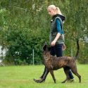 Four Qualities of a Successful Dog Trainer