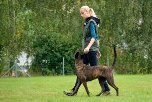 Dog Trainer with Dog