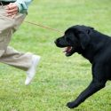 What to Consider Before Becoming a Dog Trainer