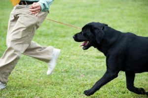 Dog trainer Running with a Dog During a Class
