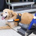 The Importance of Training a Service Dog and their Responsibilities