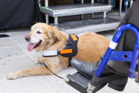 Service Dog Responibilities to it's Owner