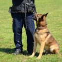 Top Qualities of a Security Dog