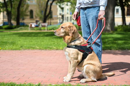 Service Dog Trained to Aid Their Owner
