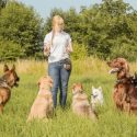 What to Know About Dog Trainer Certification