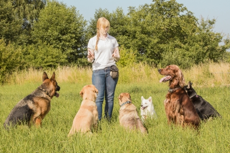 Becoming a Certified Dog Trainer