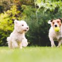 The Importance of Puppy Socialization Through Dog Training Classes