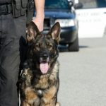 Police Dog Cameras