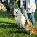 Dog Trainers Teach Dogs (and Owners!)