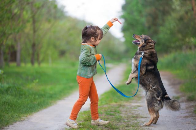 dog trainer dog training