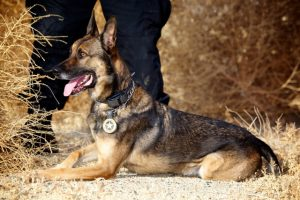 police dog K9 handler school working dog