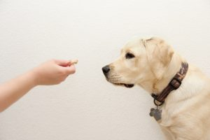 become a dog trainer dog trainer course