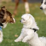 Socializing an Aggressive Dog