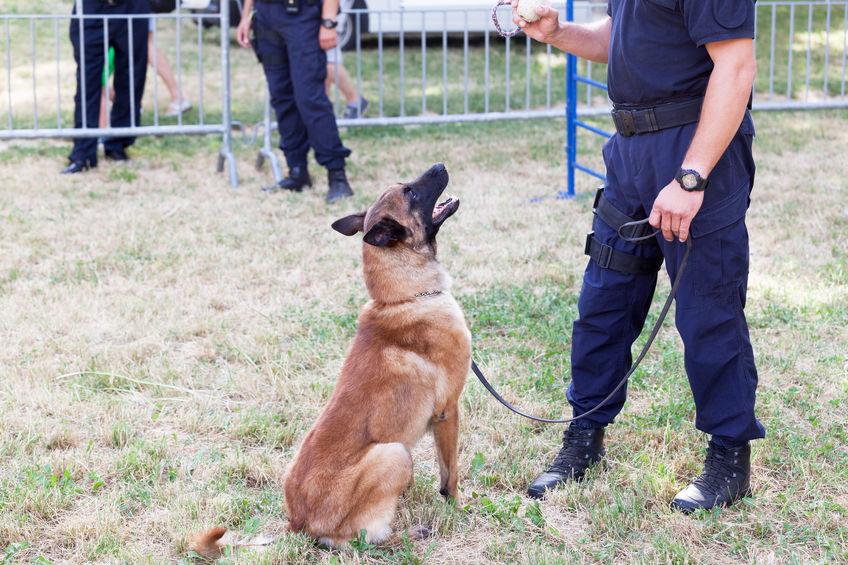 Police Dog Trainer