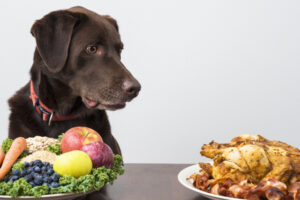 choosing a dog food