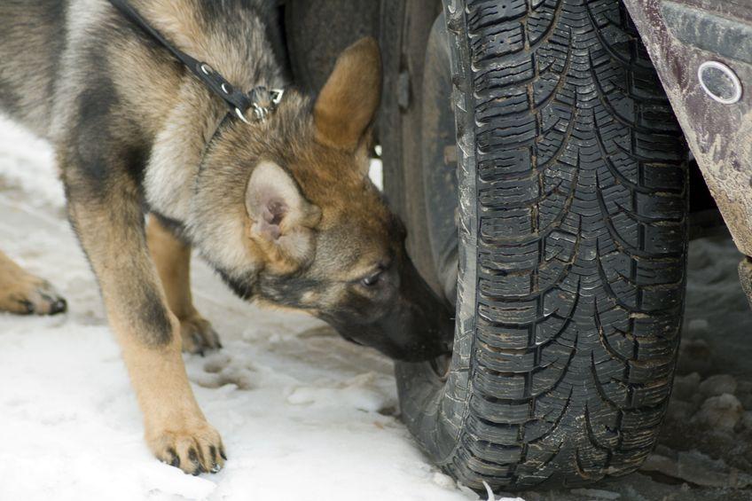 Drug Dog Sniffing Tires